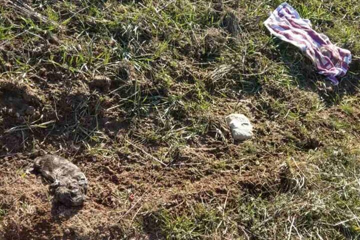 Zu sehen: Ein Handtuch liegt neben dem toten Hundebaby.