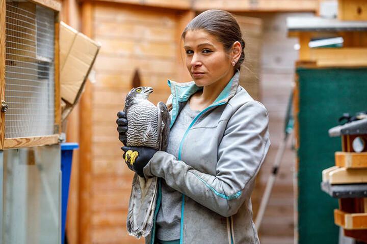 Darf die gesundeten Tiere wie diesen Falken nicht in die Freiheit entlassen:  Saskia Keller (31) leitet die Auffangstation.
