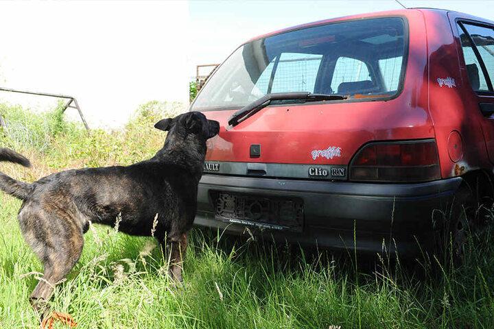 Vierbeiniger Kollege: Der Spürhund schnüffelte auch an einem Auto auf dem Grundstück.