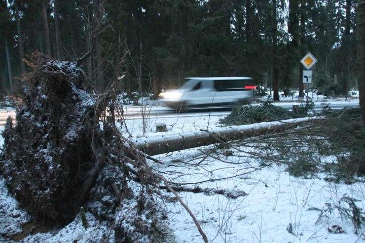Neben vielen umgeknickten Bäumen gab es im Erzgebirge auch noch etwas Neuschnee.