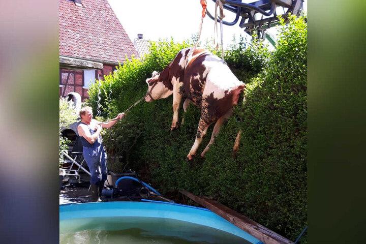 Per Traktorgabel und Gurt wurde das Tier aus dem Wasser gehievt.