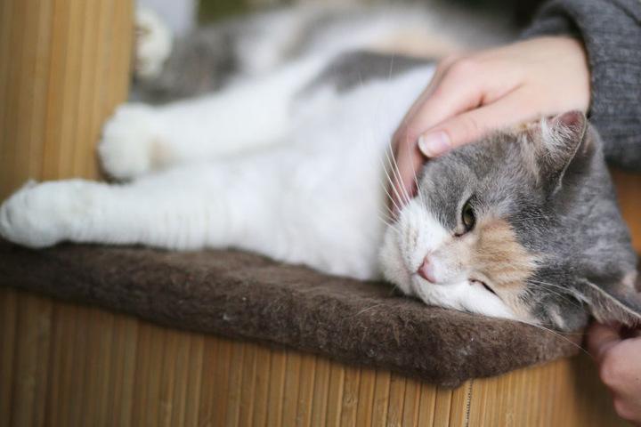 Insgesamt 13 Katzen mussten im bayerischen Selb aus einer Wohnung gerettet werden. (Symbolbild)