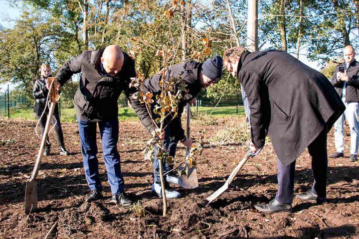 """Bei dem ökologisch-sozialen Projekt """"Fame Forest"""" können Künstler, die in der Barclaycard-Arena auftreten, Baumpate werden."""