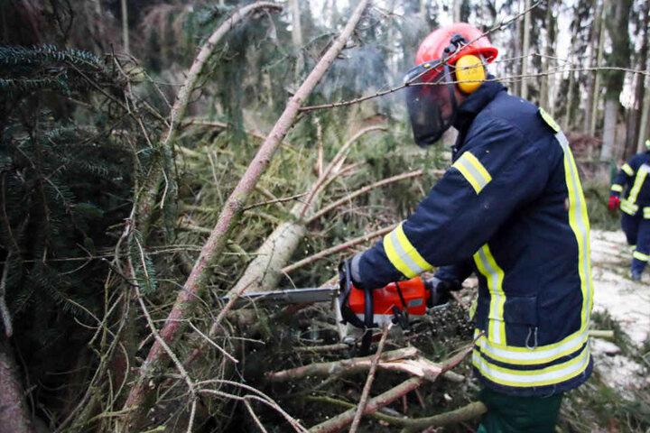 """Nach """"Friederike"""" musste die Feuerwehr zahlreiche umgestürzte Bäume beseitigen."""