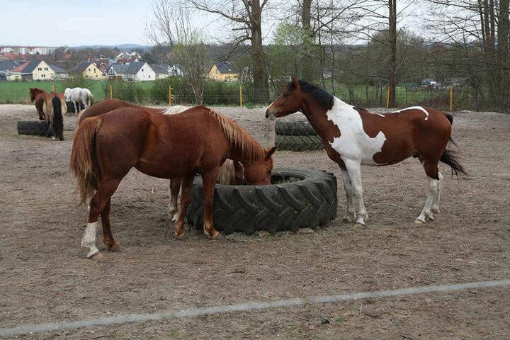Gleich zweimal hintereinander versuchten Einbrecher in der Pferdepension  Beute zu machen.