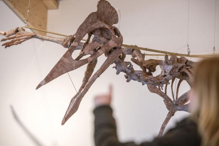 Er ist der wahrscheinlich größte je entdeckte Flugsaurier mit zwölf Meter Spannweite und einer halben Tonne Gewicht.