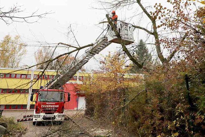 Vor einem Jahr angekündigt, gestern umgesetzt: Feuerwehrleute lichten den Baumbestand auf dem Spielplatz.