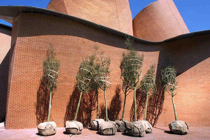 Ein Foto von 2005. Damals wurden die Bäume gepflanzt, die heute sterben.