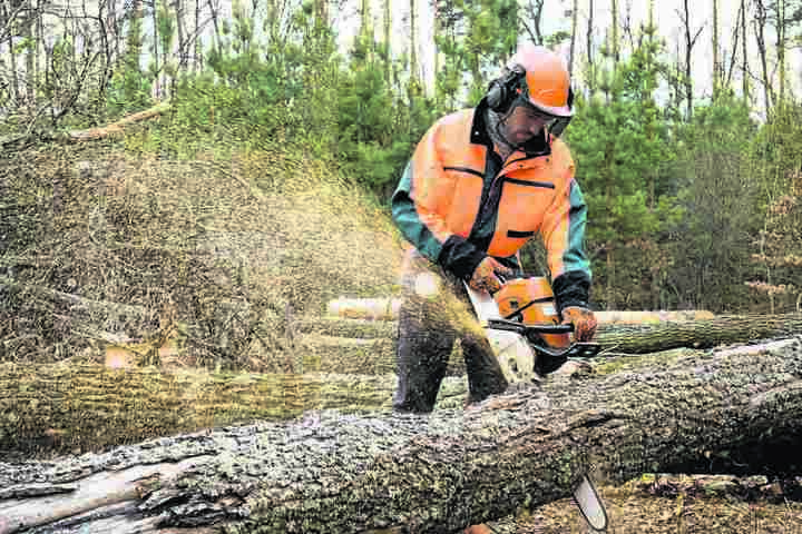 Im Wald kreischen jetzt wieder die Motorsägen. Was Jahrzehnte zum Wachsen brauchte, ist in Sekunden gefällt.