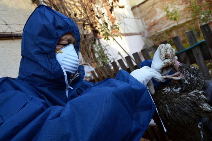 Der Virus gilt als hochansteckend und gefährlich.