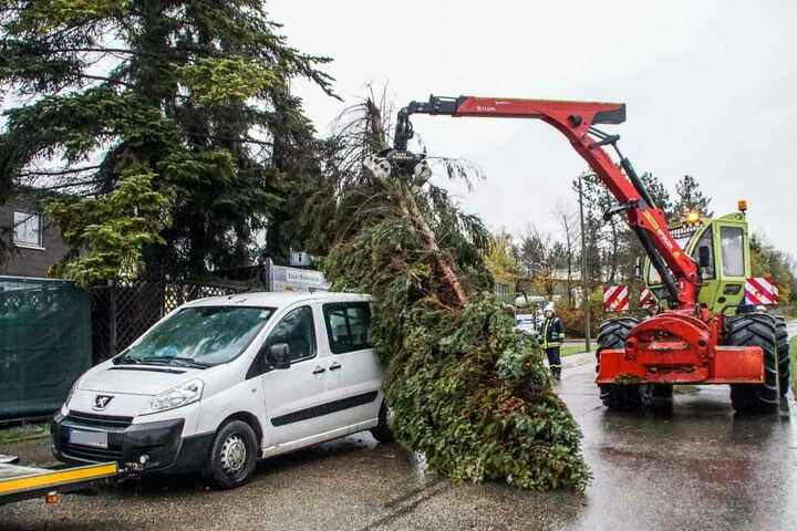 Viele Bäume waren umgeknickt. Nicht selten hatte es dabei Autos erwischt.