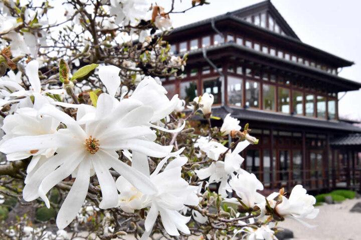 Im Japanischen Garten in Bad Langensalza wird am Wochenende gefeiert.