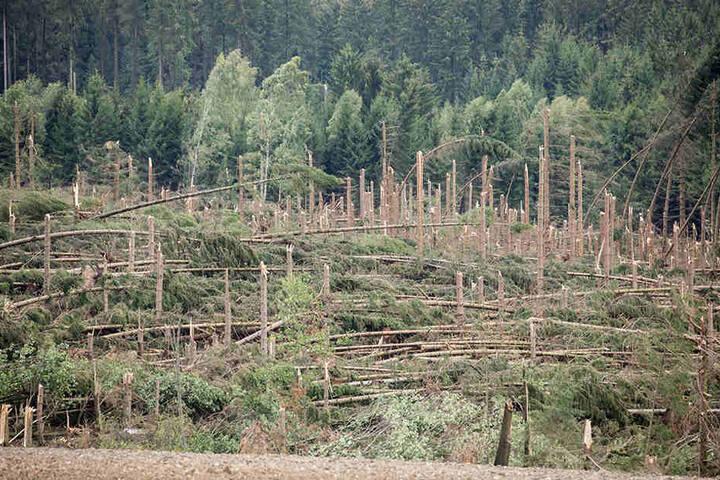 Offenbar eine Windhose zerstörte dieses Waldstück bei Brünlos.