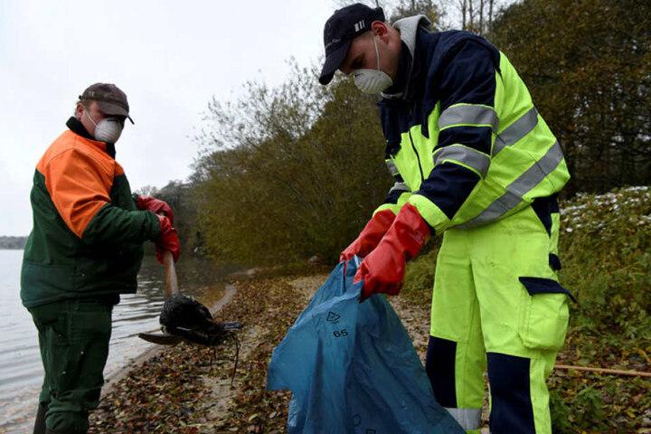 Nahe Konstanz am westlichen Bodenseeufer waren mehr als 30 tote Reiherenten gefunden worden.