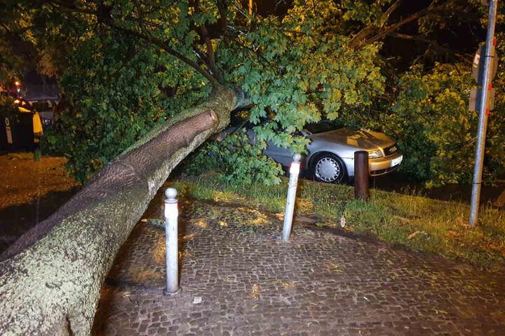 In Potsdam stürzte ein Baum auf ein parkendes Auto.