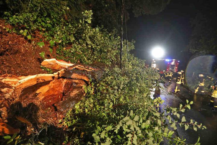 Auch in Oberlungwitz tobte das Gewitter: In der Ursprunger Straße brach ein großer Ast ab und fiel auf eine Stromleitung, die dadurch abriss.