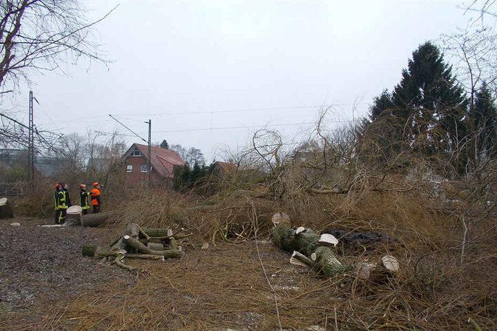 Der Mann fällte mehrere Bäume auf seinem Grundstück.