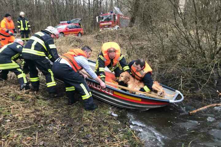 Zum Glück konnte die Feuerwehr den Hund rechtzeitig aus dem Wasser ziehen.