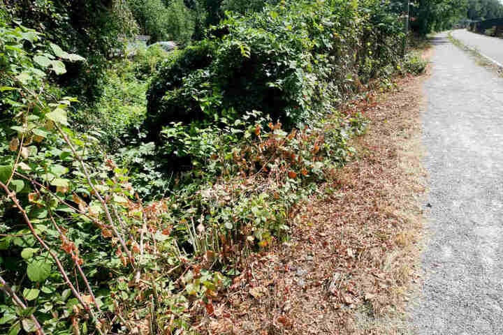 Das Opfer wurde verletzt im Gebüsch gefunden.