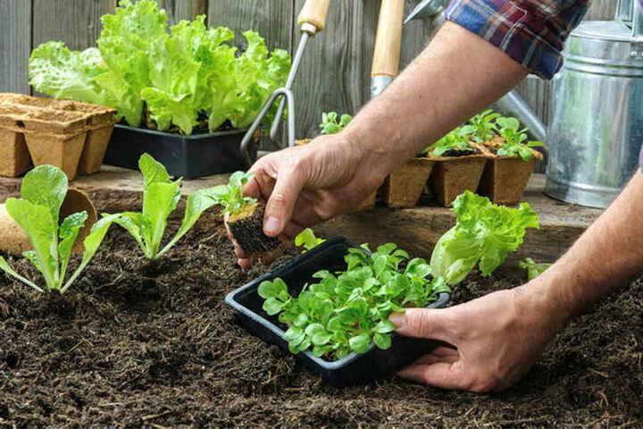 Klein- und Balkongärtnern juckt es in den Fingern. Doch für das Anpflanzen von Gemüse- und Zierpflanzen sollte man sich noch etwas Zeit lassen. Denn in den Nächten kann es nochmal frostig werden.