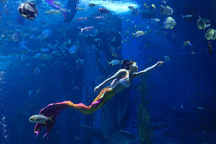 Zieht euch die Flossen an und ab geht es unter Wasser. (Symbolbild)