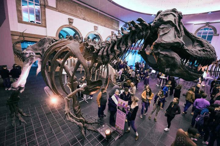 Das Senkenbergmuseeum ist eines der größten Naturkundemuseen in Europa.