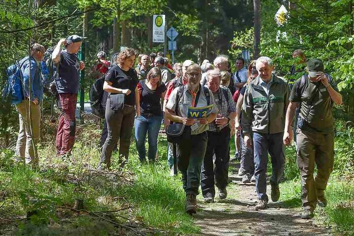 Zur Eröffnung begab sich der Umweltminister mit seinen Gästen auf eine Kurzwanderung. Zwei Drittel der Fortsteig-Route verlaufen auf sächsischem, der Rest auf tschechischem Territorium.