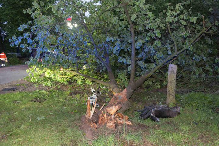 Gegen diesen Baum wurde das Fahrzeug geschleudert.