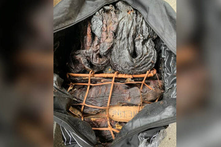 Im Gepäck wurden 80 Kilogram tote Fische und Schlangen gefunden.