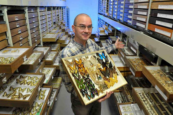 Zoologe Sven Erlacher (43) verwahrt im Magazin des Naturkundemuseums rund 250.000 Falter.