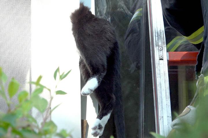 Von der Katze waren nur noch Hinterbeine und Schwanz zu sehen.