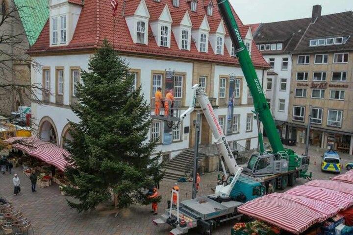 Auch auf dem Alten Markt steht der Baum bereits.