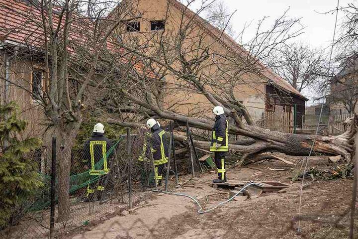 Ein Baum kippte aufs Dach eines Familienhauses.