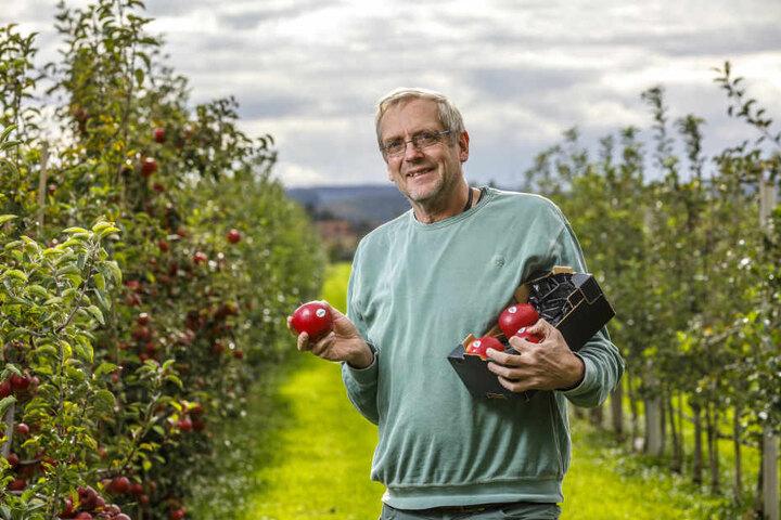 Dr. Andreas Peil (57) ist Züchter am Julius-Kühn-Institut in Pillnitz.