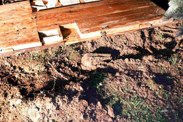 Schock von unten: Der Blitz schlug in eine nahe Fichte ein - deren Wurzeln explodierten und drangen so in den Lauben-Keller vor.