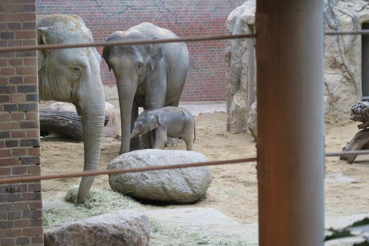 """Mutter Rani und ihrem kleinen Bull geht es soweit gut. """"Das Zusammenspiel klappt auch"""", hieß es am Dienstag."""