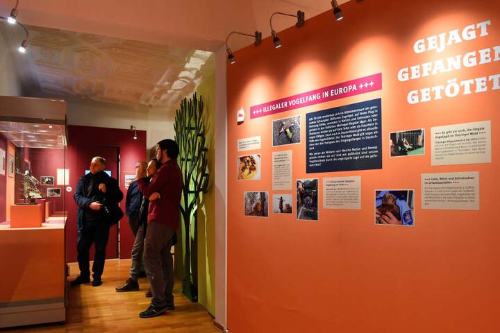 Im Naturkundemuseum in Erfurt kann man sich bald auch über die Käfer informieren. (Archivbild)