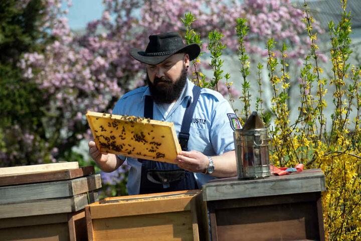 Der Justizbeamte Sebastian Laubach kontrolliert einen Bienenstock in Remscheid.