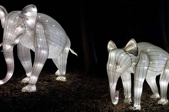 Zahlreiche Tierfiguren erleuchten am Samstagabend den Osnabrücker Zoo.