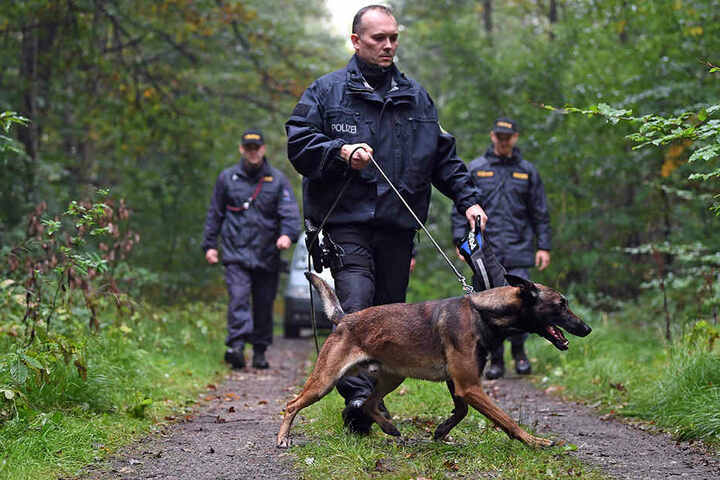 Der Bruder des Malinois: ein Belgischer Schäferhund. Hier bei einer Übung nahe Zwickau.