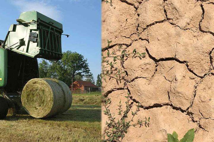 Nach dem Dürresommer sind Heuballen in Sachsen Mangelware.