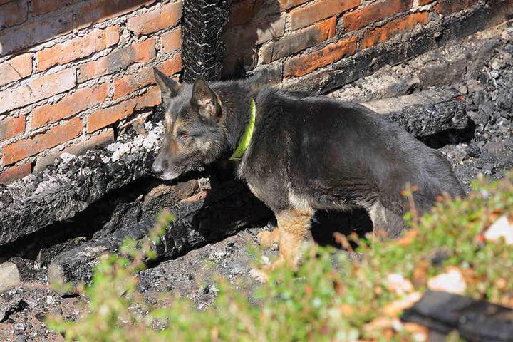 Spürhund Fee (8) war am Montag am Brandort im Einsatz.