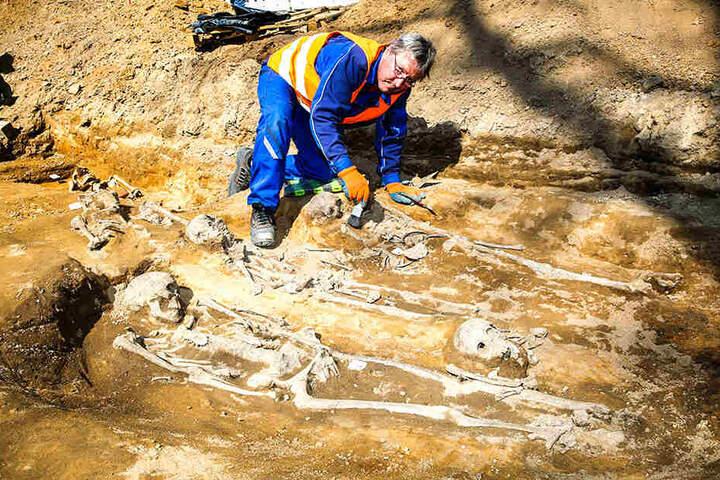 Bei den Bauarbeiten zur Neugestaltung des Riesaer Rathausplatzes kamen sie zum Vorschein: 46 Skelette aus dem Hochmittelalter wurden gefunden. Grabungshelfer Peter Körber (56) zeigt eines der Skelette.