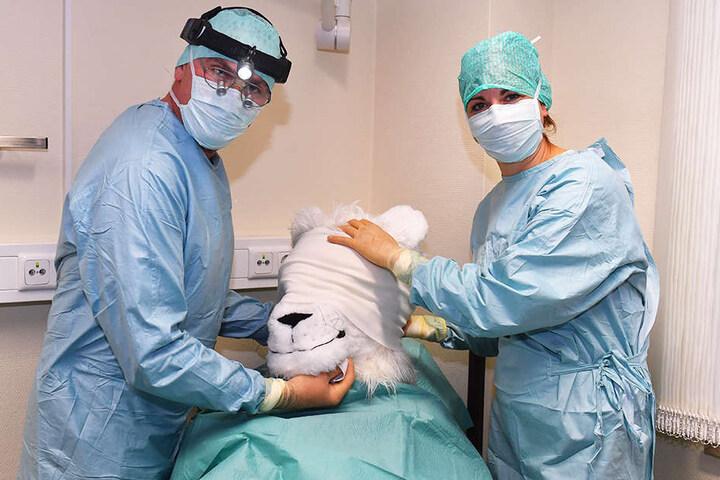 Frisch verbunden nach der OP nimmt Chefarzt Sönke Eger (l.) seinen Patienten nochmal in Augenschein, heute kommt der Verband ab und der neue Jago wird präsentiert.