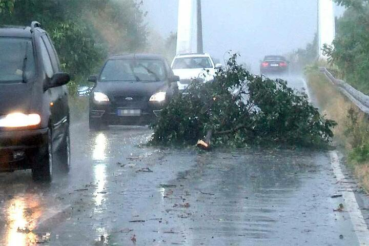 Ein großer Ast liegt nach einem Starkregen und Sturm auf einer Straße.