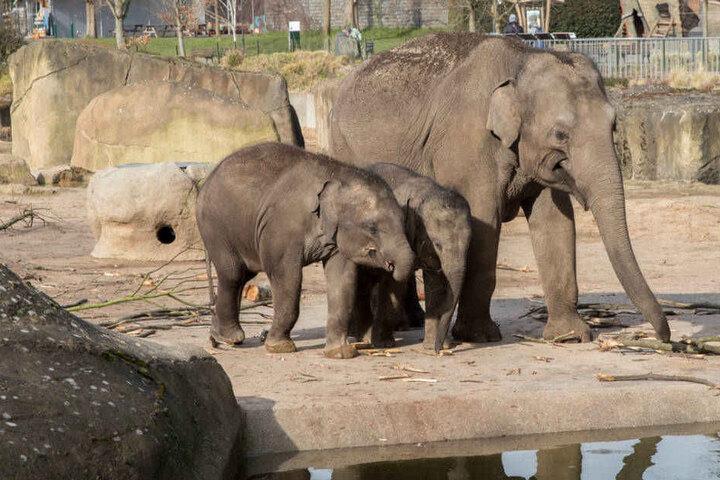 Schaut euch doch mal am Sonntag beim Elefantentag die putzigen Jungtiere an.