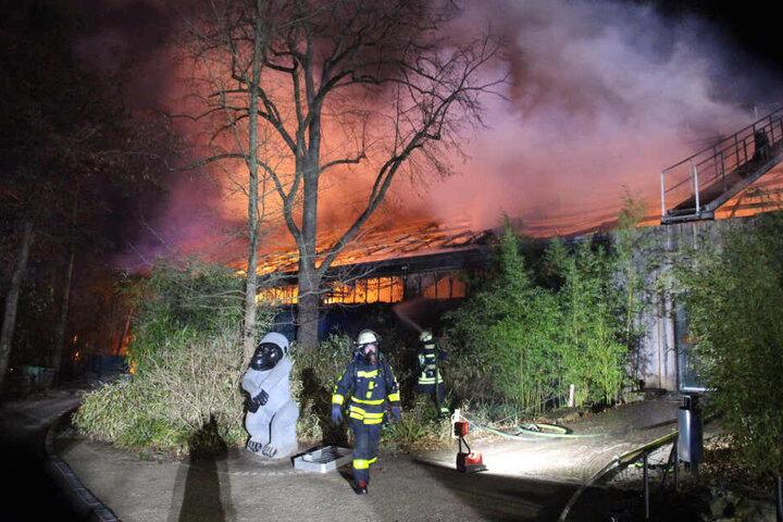 In der Nacht kämpften Feuerwehrleute gegen die Flammen im Affenhaus im Zoo Krefeld.