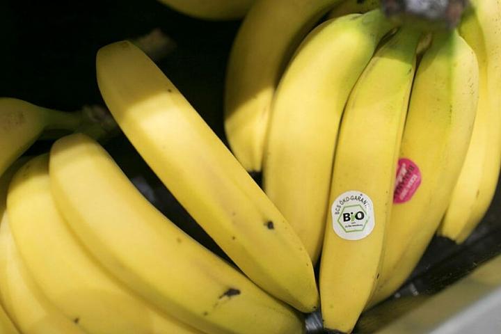 Ein unaufhaltsamer Pilz könnte unsere Bananen aussterben lassen.