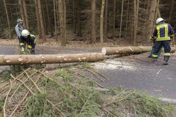In Fllöha blockierte eine große Fichte die Eubaer Straße.