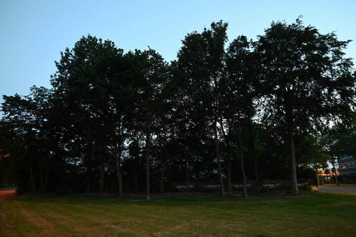 Bäume stehen vor der Freiburger Diskothek, nahe der die junge Frau missbraucht wurde.